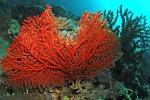 Due anni di ricerche in un documentario: ecco i tesori sottomarini delle coste siciliane