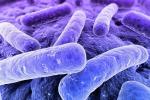 Trasmessi ai figli dalla madre: anche i batteri si ereditano