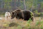 Orsi e lupi tornano a popolare l'Europa