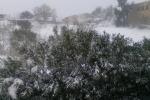 """Neve e gelo in Sicilia, Coldiretti: """"Danni all'agricoltura, prevedere aiuti alle aziende"""""""
