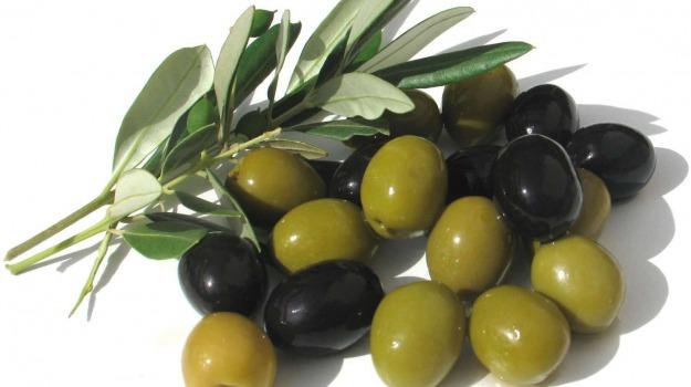 AGRICOLTURA, imprese, olive, Sicilia, Economia