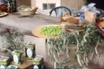 Successo a Nicosia per la seconda edizione della sagra dell'Ulivo e dell'Olio extravergine d'oliva - Video