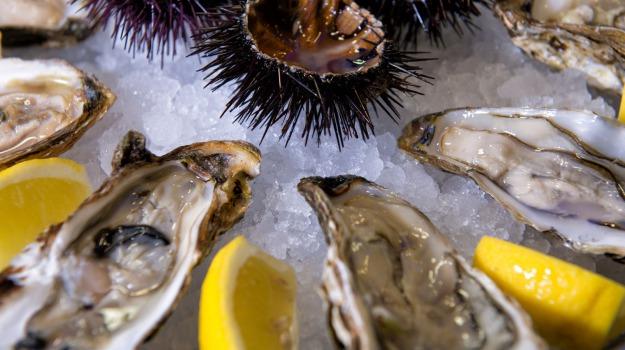 molluschi, oceano, Sicilia, Società