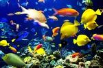 Le branchie dei pesci provano i danni alla Barriera Corallina