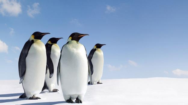 freddo, pinguini, Sicilia, Società