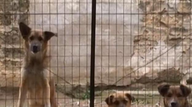 Mussomeli cani randagi, Caltanissetta, Cronaca