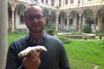 Grani antichi, miele e cioccolato: così è nato il cannolo siciliano
