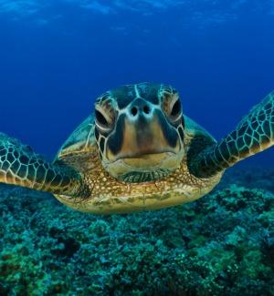 Lezioni sulle tartarughe in venti spiagge dell'Agrigentino