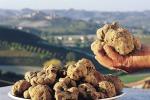 Anno nero per il tartufo: poche quantità, prezzo sale a 450 euro all'etto