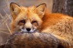 Diritti degli animali, la Lav in 300 piazze italiane per l'eco maratona