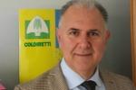 Chiarelli: «Sarà vendemmia di alta qualità ora la Sicilia punti ai nuovi mercati»