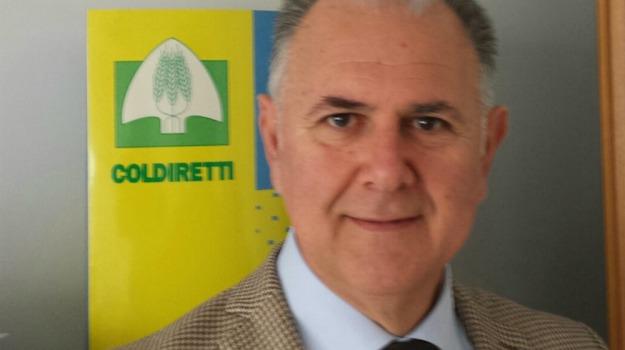AGRICOLTURA, coldiretti, mafia, Alessandro Chiarelli, Sicilia, Economia