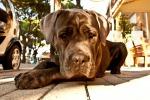 """Anche in hotel assieme al proprio cane: Vienna e la Svizzera sono i luoghi più """"pet friendly"""""""