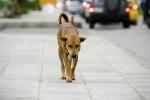 Mazara, ciclista attaccata da tre cani a Capo Feto