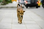 Cani avvelenati, è allarme a Campofranco