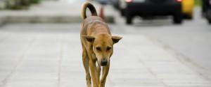 Cani avvelenati, a Sciacca manifestazione animalista: attesi centinaia di attivisti