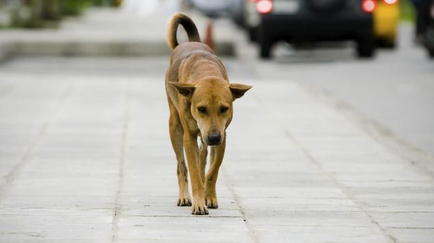asp, cani randagi, sterilizzazione, Catania, Cronaca
