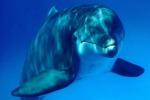 Avvistati delfini a Siracusa, video diffusi sul Web