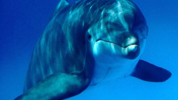 avvistamento, delfini, Siracusa, La bella Sicilia