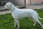Cani con orecchie sanguinanti e infette, un palermitano indagato