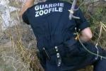 Cane investito a Ragusa, soccorso dalle guardie zoofile