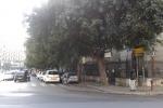 Palermo, in piazza Castelnuovo gli alberi oscurano la scuola