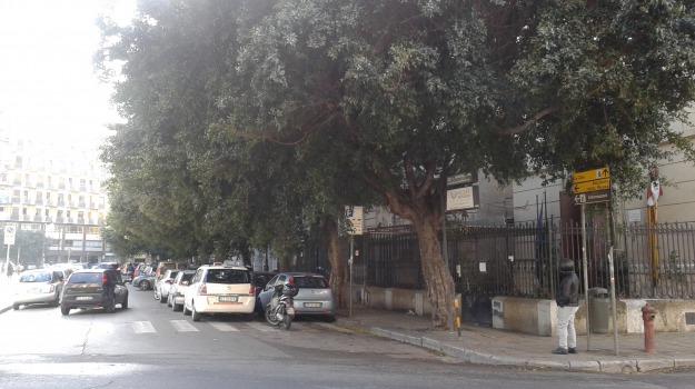 alberi, illuminazione, potature, scuola, Palermo, Cronaca