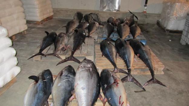sequestro pesce siracusa, Siracusa, Cronaca