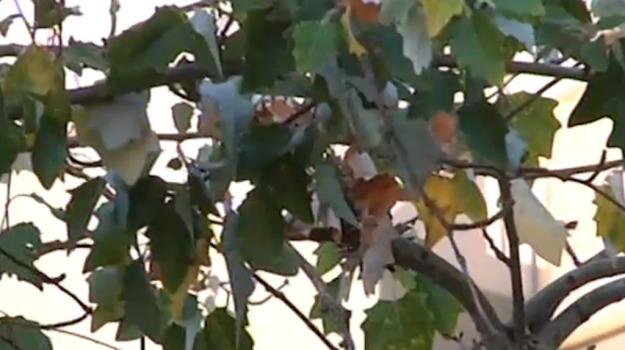 alberi, verde, Palermo, Cronaca