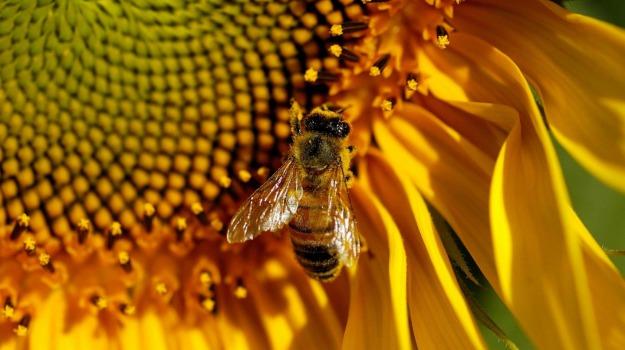 api, furti, Sicilia, Società