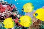 Possibile salvare la grande Barriera Corallina: ecco come