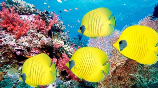 aceto, barriere coralline, Sicilia, Società