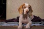 Beagle ama rilassarsi con il calore del phon: il video diverte il web