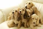 Nasce il primo asilo per cuccioli di cane