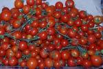 La grande distribuzione in aiuto del pomodoro di Pachino