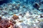 Coralli sbiancati dal riscaldamento dei mari: nuova chanche di salvezza