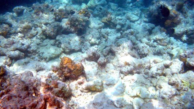 coralli, salvezza, Sicilia, Società