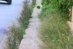 Contro le erbacce e i rovi a Palermo si punta all'utilizzo dei prodotti chimici