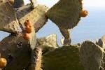 I colori e la bellezza della Sicilia in un cortometraggio ispirato all'arte di Renato Guttuso - Video
