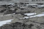 Ricercatori italiani scoprono una foresta fossile in Antartide