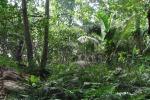 Gli alberi sono fonte di inquinamento: colpa di foreste poco curate