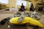 Cat Cafè, cibo vegano accarezzando un gatto