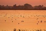 """Habitat umidi a rischio: """"Servono urgenti azioni di tutela"""""""