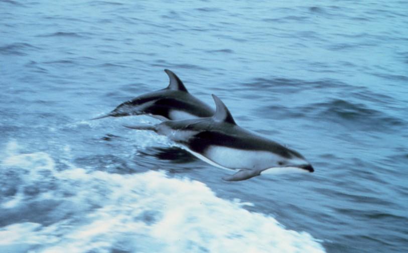 I 20 Animali Più Strani E Sconosciuti Del Mondo Foto Giornale