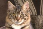 Picchia e morde il suo gatto, una casalinga denunciata a Belpasso