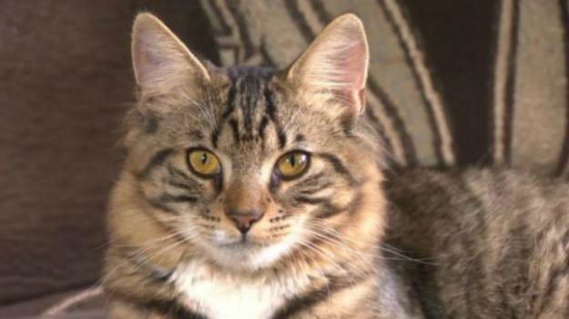 Gatto ucciso Siracusa, Siracusa, Cronaca