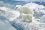 Orsi polari sempre più a nord: colpa del riscaldamento della Terra