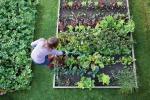 Zappettare e fare l'orto in casa, la nuova passione italiana