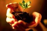 Pianta un seme in giardino, al via una campagna