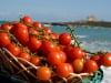 Crisi del pomodoro siciliano, confronto tra il ministro Martina e il sindaco di Pachino